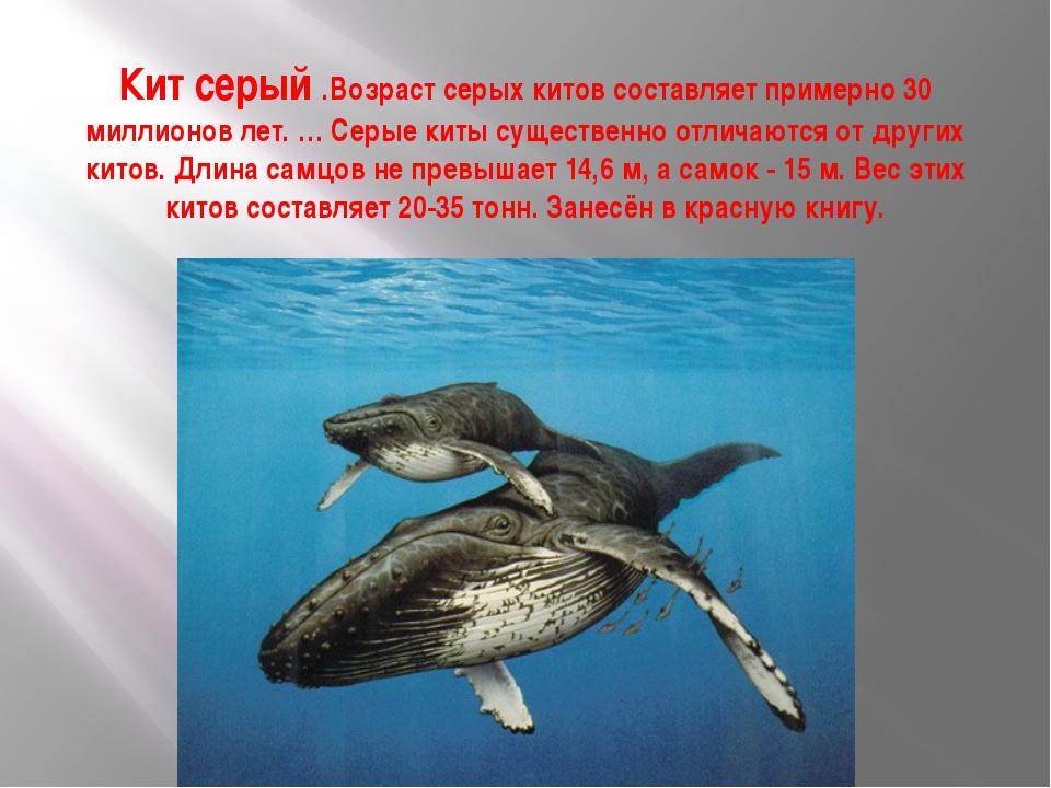 Кит серый .Возраст серых китов составляет примерно 30 миллионов лет.… Серые...