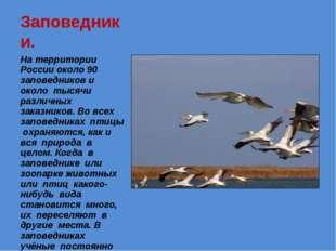 Заповедники. На территории России около 90 заповедников и около тысячи различ