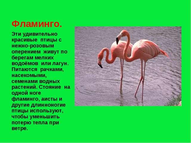 Эти удивительно красивые птицы с нежно-розовым оперением живут по берегам мел...