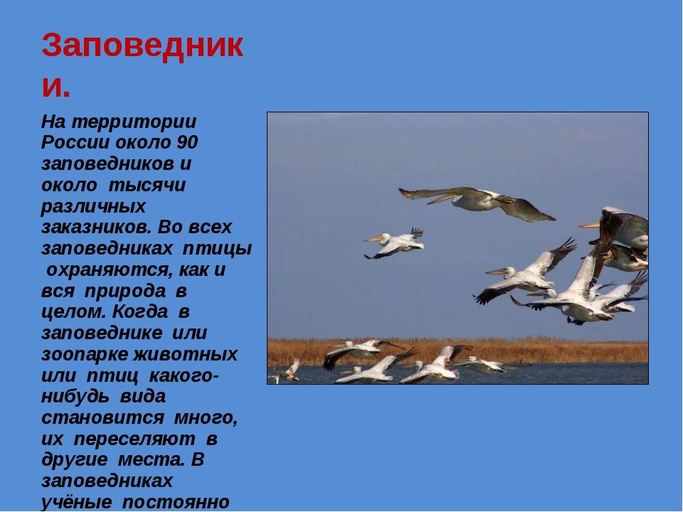 Заповедники. На территории России около 90 заповедников и около тысячи различ...