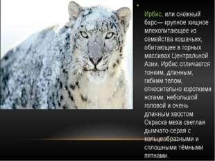 Ирбис, или снежный барс— крупное хищное млекопитающее из семейства кошачьих,