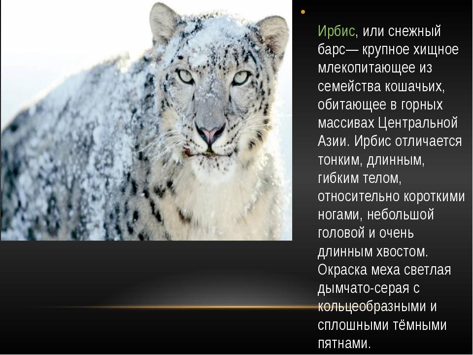 Ирбис, или снежный барс— крупное хищное млекопитающее из семейства кошачьих,...