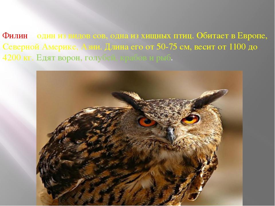Филин – один из видов сов, одна из хищных птиц. Обитает в Европе, Северной Ам...
