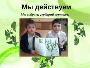 Мы действуем Мы собрали гербарий сорняков.