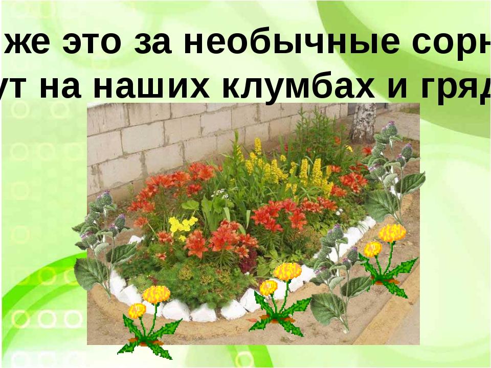 Что же это за необычные сорняки растут на наших клумбах и грядках?