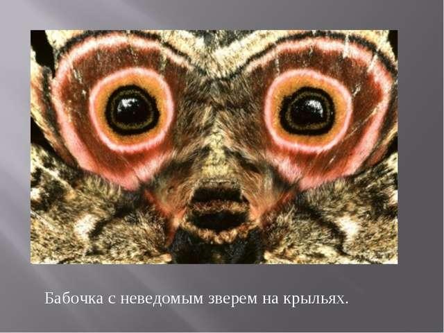 Бабочка с неведомым зверем на крыльях.