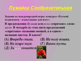 Лужайка Сообразительная Задание из международной игры- конкурса «Русский медв
