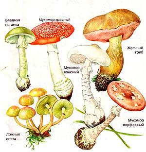 http://ogorod-legko.ucoz.ru/_fr/0/4416631.jpg