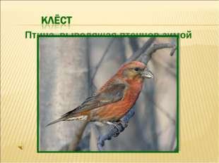 Птица, выводящая птенцов зимой
