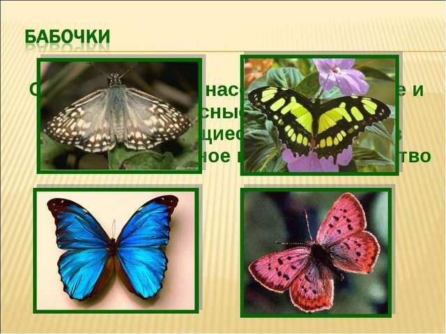 Самые красивые насекомые. Хрупкие и прекрасные создания, превращающиеся из гу...