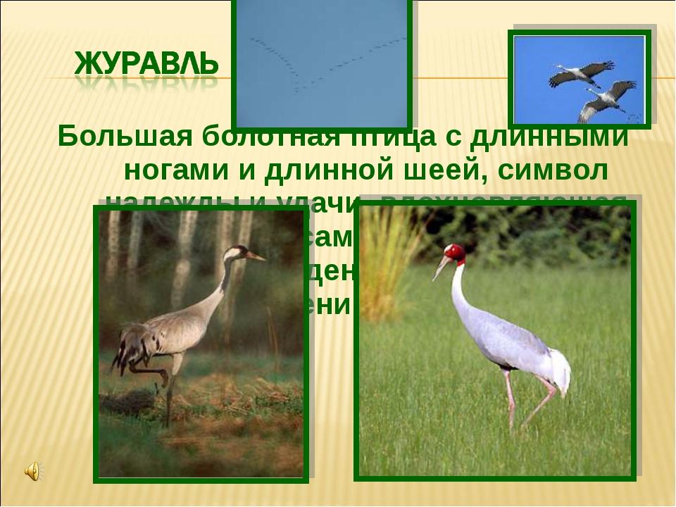 Большая болотная птица с длинными ногами и длинной шеей, символ надежды иуда...
