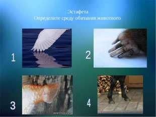 Эстафета Определите среду обитания животного