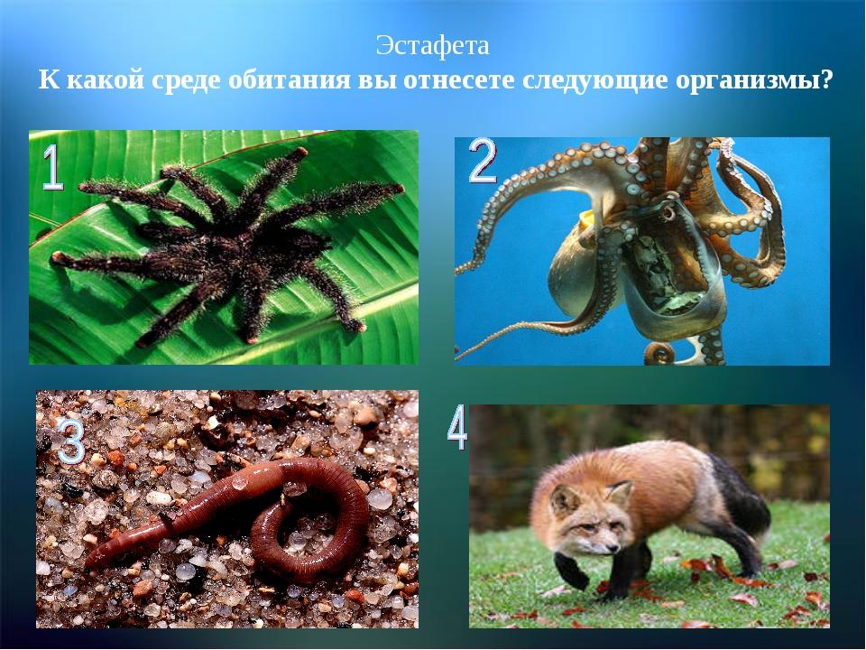 Эстафета К какой среде обитания вы отнесете следующие организмы?
