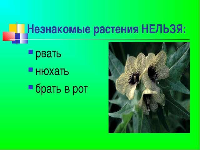 Незнакомые растения НЕЛЬЗЯ: рвать нюхать брать в рот