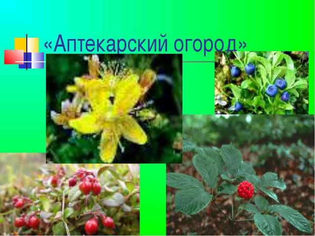 «Аптекарский огород»