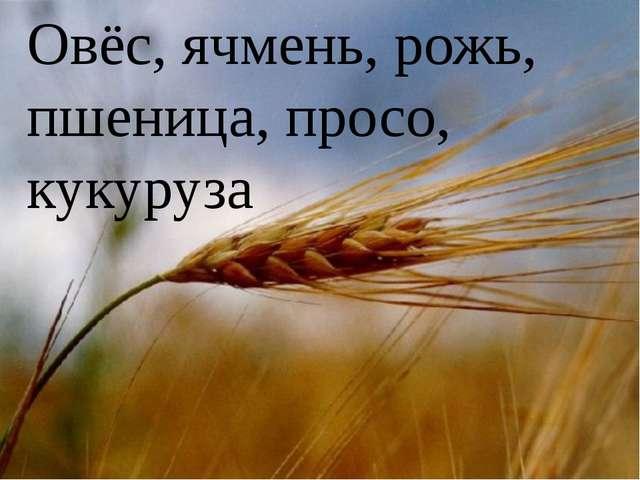 Овёс, ячмень, рожь, пшеница, просо, кукуруза