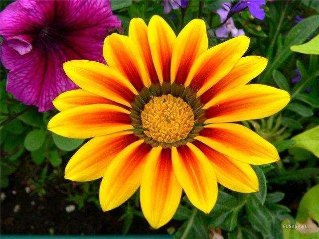 G:\8 марта 14 год\Звездочет\цветок.jpg