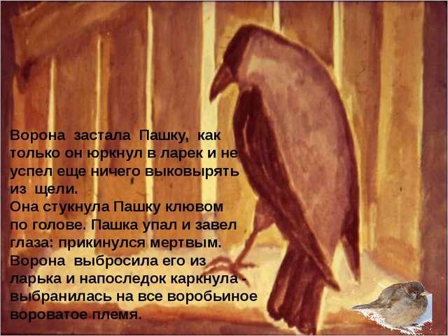 Ворона застала Пашку, как только он юркнул в ларек и не успел еще ничего выко...