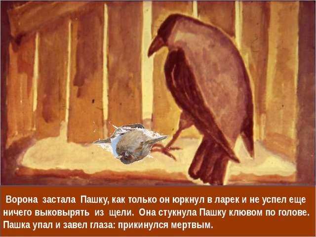 Ворона застала Пашку, как только он юркнул в ларек и не успел еще ничего вык...