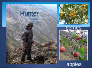 apples berries Hunter