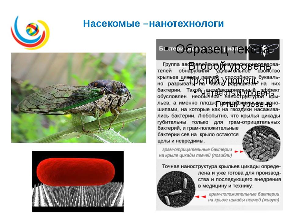 Насекомые –нанотехнологи