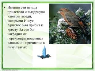 Именно эти птицы прилетели и выдернули клювом гвозди, которыми Иисус Христос