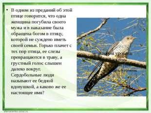 В одном из преданий об этой птице говорится, что одна женщина погубила своег