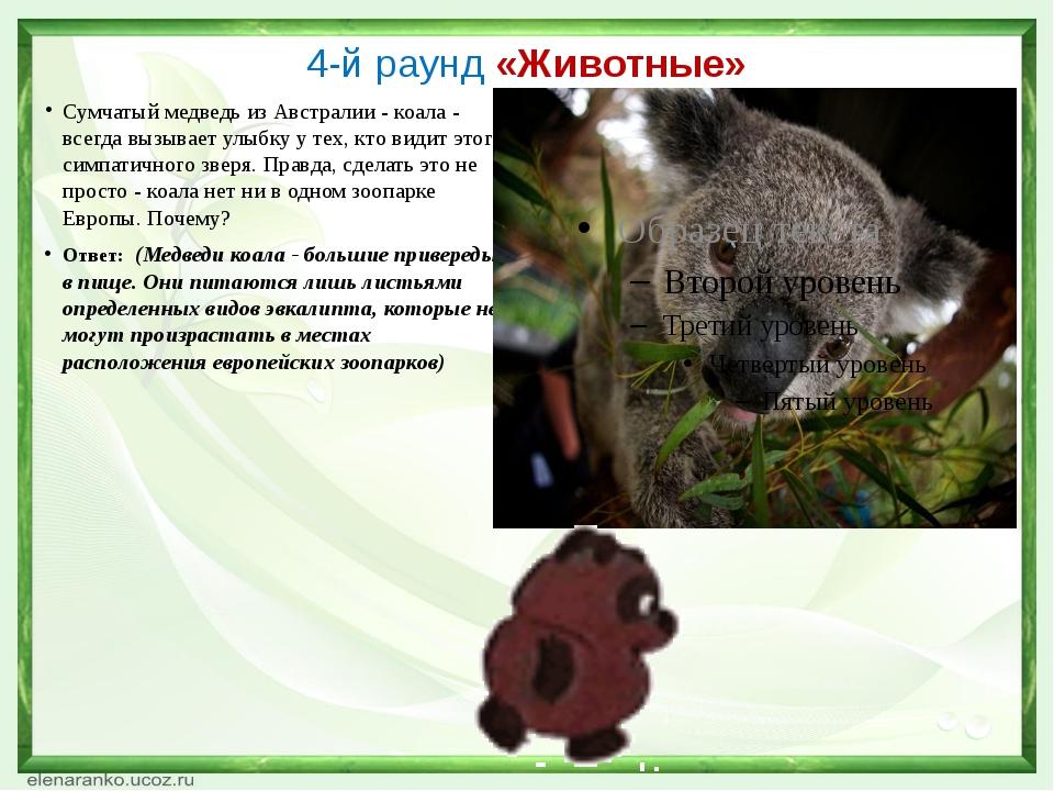 4-й раунд «Животные» Сумчатый медведь из Австралии - коала - всегда вызывает...