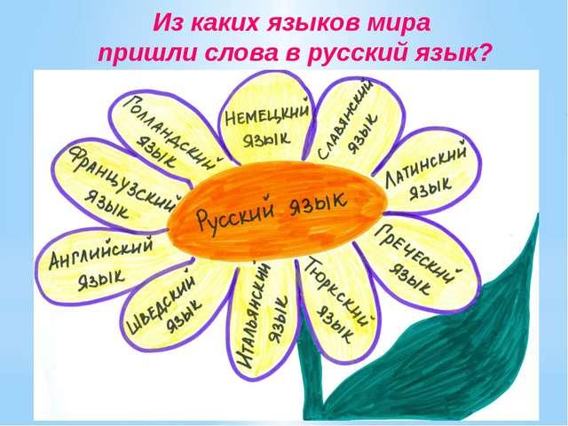 Из каких языков мира пришли слова в русский язык?