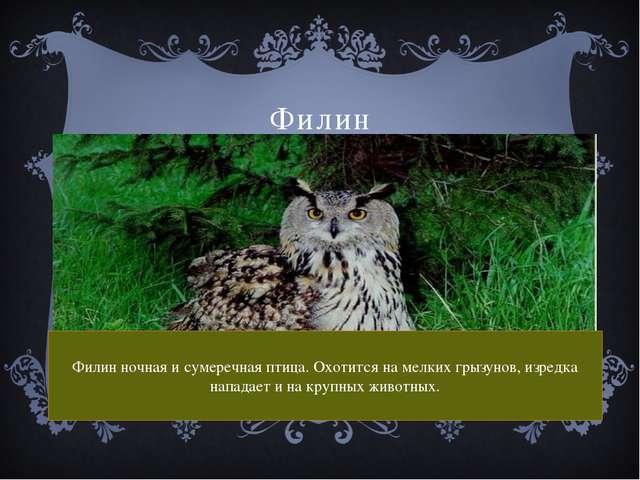 Филин Филин ночная и сумеречная птица. Охотится на мелких грызунов, изредка н...