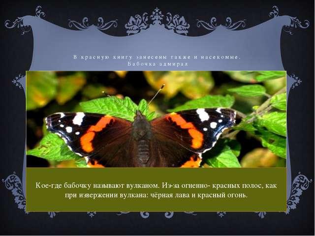 В красную книгу занесены также и насекомые. Бабочка адмирал Кое-где бабочку н...