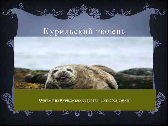 Курильский тюлень Обитает на Курильских островах. Питается рыбой.