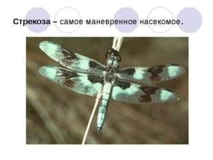 Стрекоза – самое маневренное насекомое.