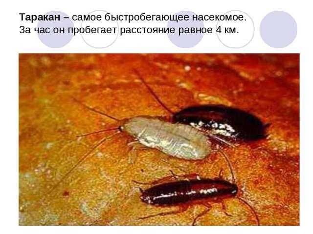 Таракан – самое быстробегающее насекомое. За час он пробегает расстояние равн...