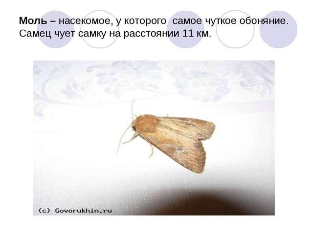 Моль – насекомое, у которого самое чуткое обоняние. Самец чует самку на расс...