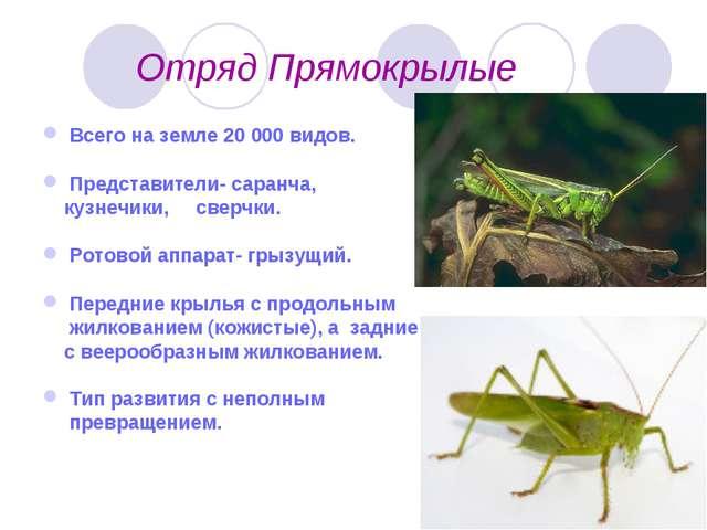 Отряд Прямокрылые Всего на земле 20 000 видов. Представители- саранча, кузне...