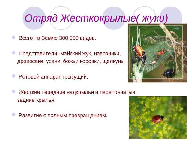 Отряд Жесткокрылые( жуки) Всего на Земле 300 000 видов. Представители- майск...