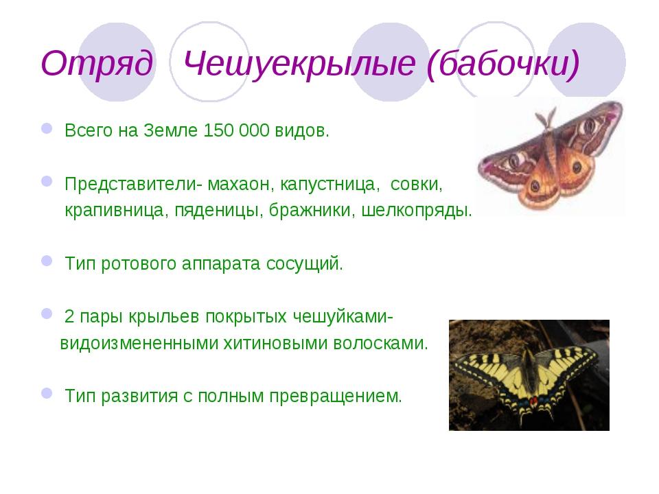 Отряд Чешуекрылые (бабочки) Всего на Земле 150 000 видов. Представители- маха...