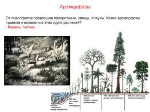 От псилофитов произошли папоротники, хвощи, плауны. Какие ароморфозы привели