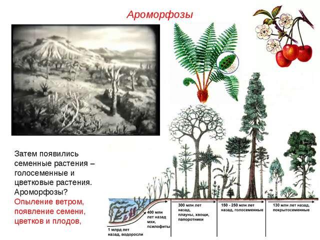 Затем появились семенные растения – голосеменные и цветковые растения. Аромор...