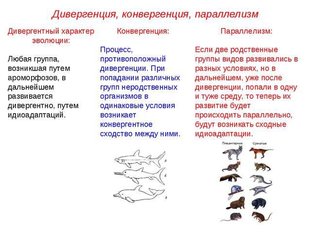 Дивергенция, конвергенция, параллелизм Дивергентный характер эволюции: Любая...