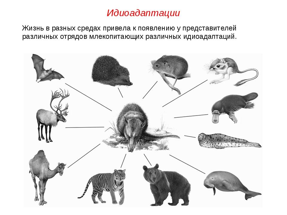 Жизнь в разных средах привела к появлению у представителей различных отрядов...