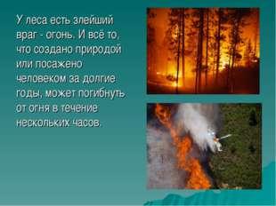 У леса есть злейший враг - огонь. И всё то, что создано природой или посажено