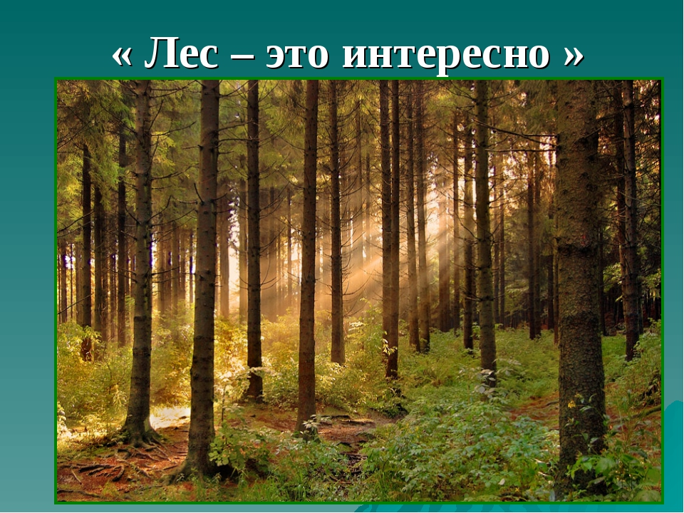 « Лес – это интересно »