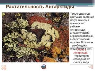 Задание 3. Заполнить таблицу «Природные зоны Антарктиды» Проверка Природная