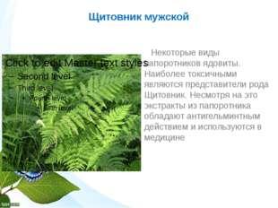 Щитовник мужской Некоторые виды папоротников ядовиты. Наиболее токсичными явл