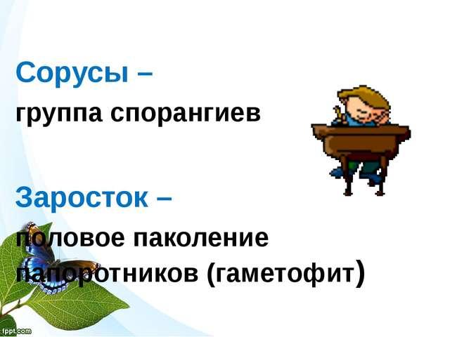 Сорусы – группа спорангиев Заросток – половое паколение папоротников (гамето...