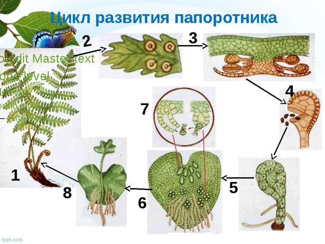 Класс папоротник хвощи плауны урок биологии доклад