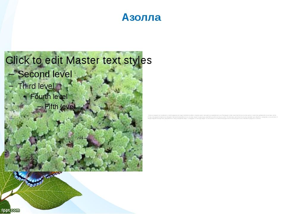 Азолла Азолла находится в симбиозе с синей водорослью рода Anabaena azollae,...