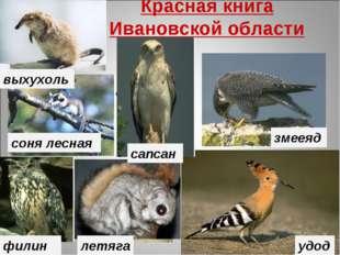 Красная книга Ивановской области В данную Красную книгу занесены редкие или и